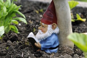 a-garden-gnome-reading-a-book